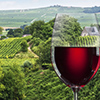 Learn more about Spring 2017: Wine Education Abroad